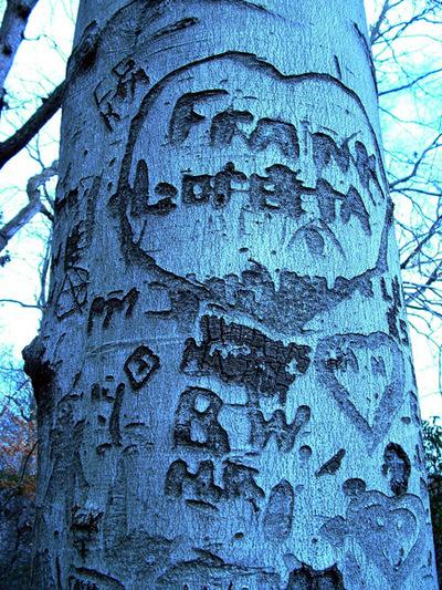 Treecarve_0022