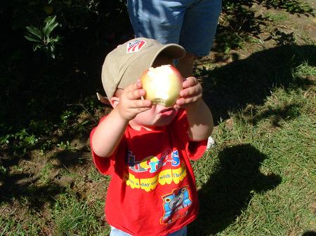 Apples_0041
