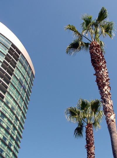 Palms0002