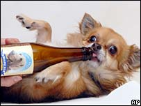 Beer_for_dogs2_2